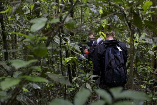 Gorilla and Wildlife Safari
