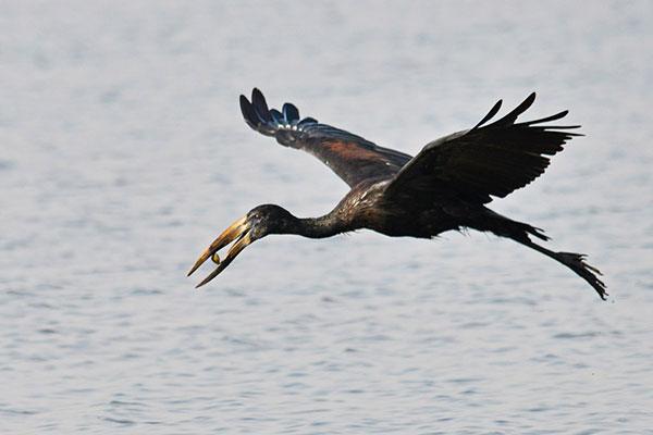 Birding in Uganda