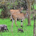 6 Days Uganda Wildlife and Gorilla Safari