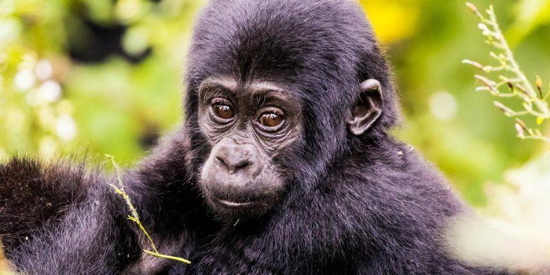 bwindi-gorilla-trekking-safari